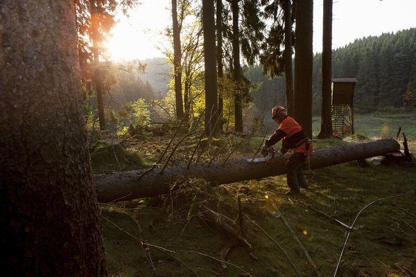 Forstarbeiter im Wald